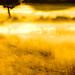 Sur la rive du lac... élan de lumière... l'arbre solitaire s'éveille...!!! by Denis Collette...!!!