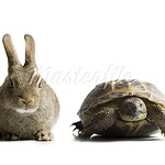 640-01358405 tortoise and hare