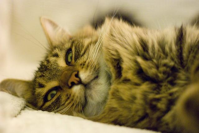 Tink Cat