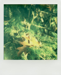 PX 70 COLOR PROTECTION