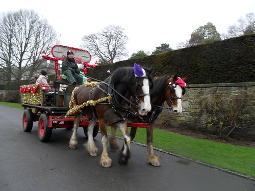12 December The Horse and Dray at Pollok Park (14)