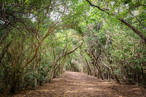 trees brown green leaves forest canon puertorico path branches shade 7d pr lush yauco vedre boque guánica bosqueseco bosqueestataldeguánica canon7d