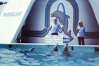 Marineland - Musical Dolphins