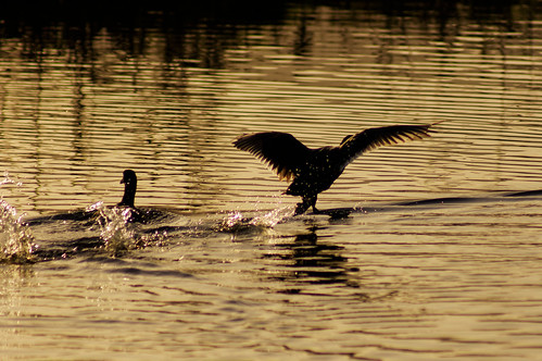 water sunset bird silhouette minolta75300mm sony sonya55 mygearandme