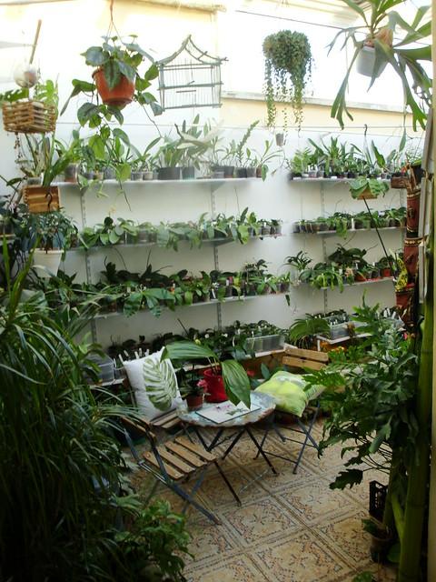 Dans mon jardin d 39 hiver - Dans mon jardin d hiver ...