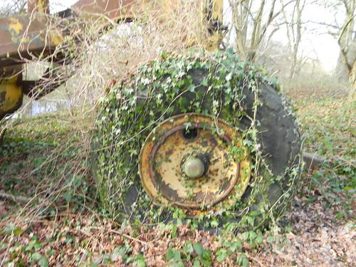 Ivy wheel