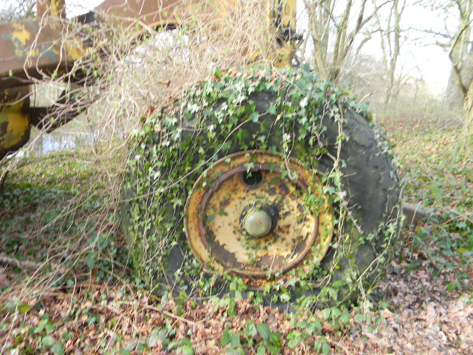 Ivy wheel This abandoned farm vehicle has been rusting away for years. Stonegate Circular