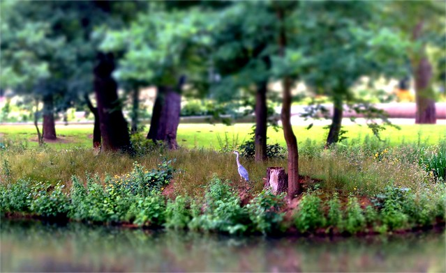 Land of the Heron