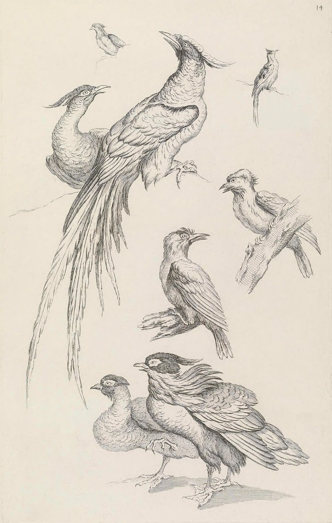 Chinese ornithological engravings