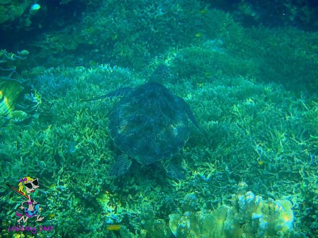 A Turtle off Tongo Sanctuary
