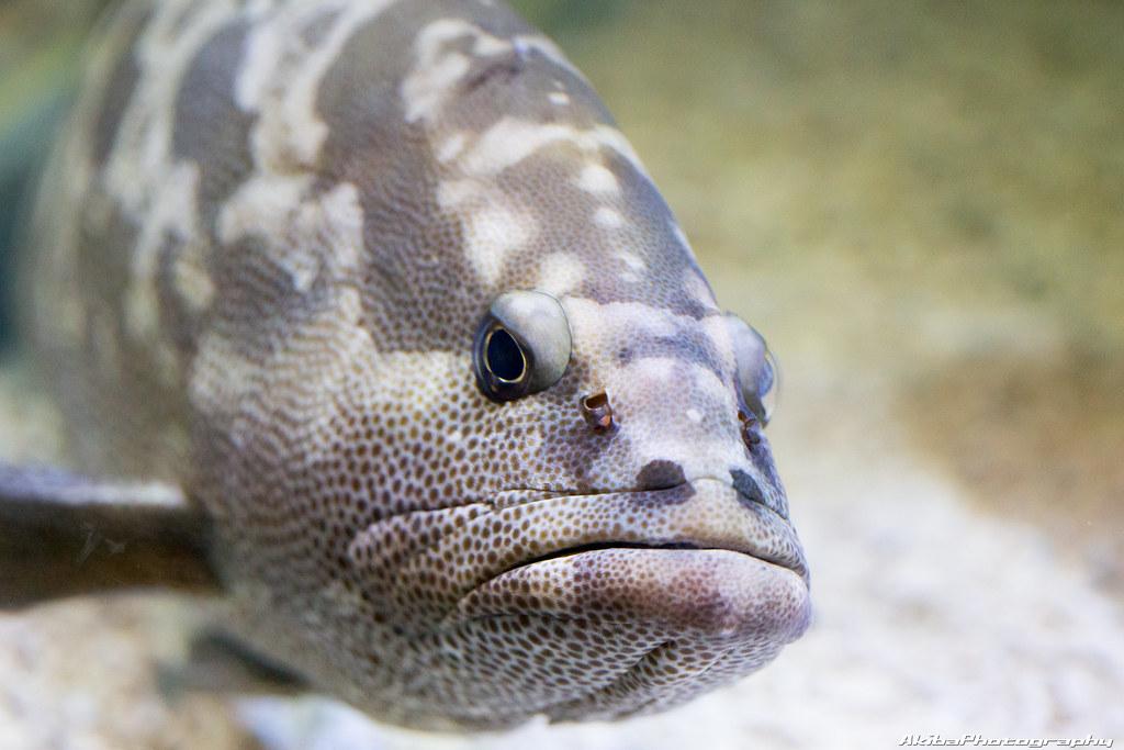 sumida-aquarium#25