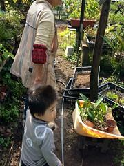 庭を探検 (2012/10/14)
