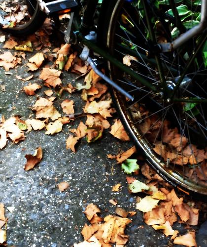 Fall Falling