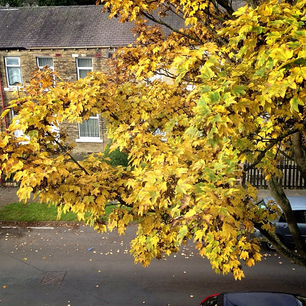 I opened my curtains to see this amazing autumn-ness. I've usually only seen darkness in the morning and wishing I was still in bed. The photo doesn't do it justice