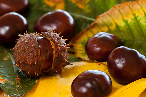 43/52 Chestnuts by Johannes D. Mayer