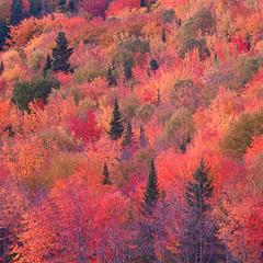 [フリー画像素材] 自然風景, 森林, 紅葉・黄葉 ID:201210280400