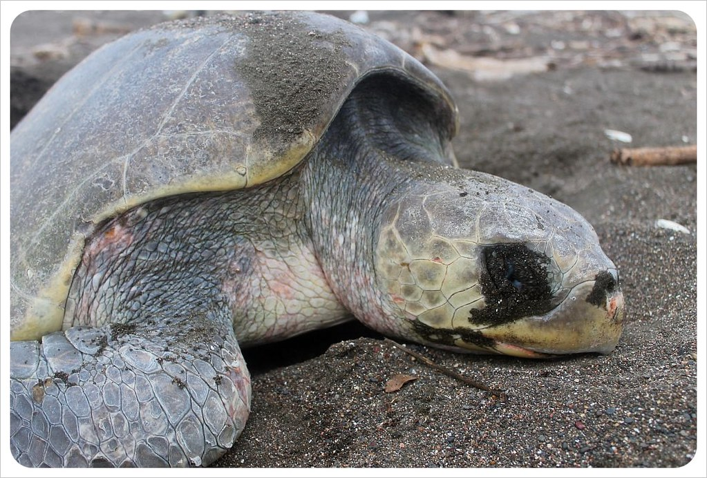 turtle exhausted