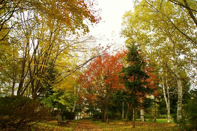 黄葉散歩道