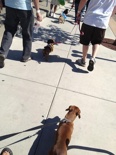 Weenie walk