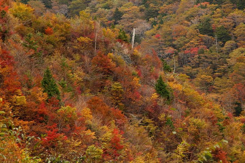 IMG_4116_10-27 Tsubayama