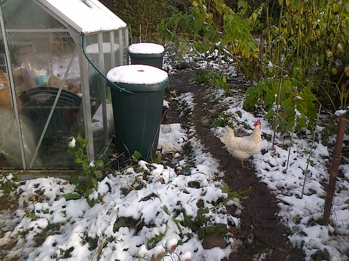 Snow on allotment Oct 12