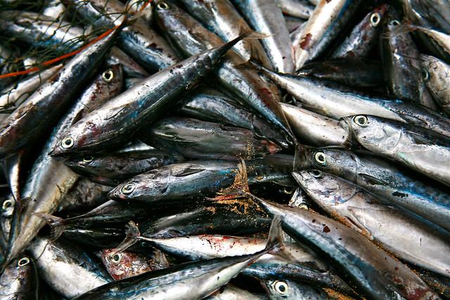 gambar ikan segar