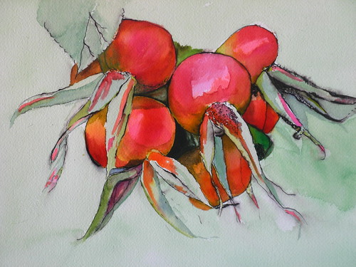 Red Rosehips 02