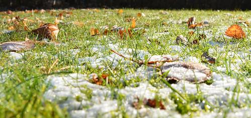 autumn snow leaf snö höst löv