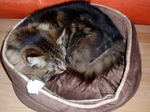 Adonis in seinem neuen Katzenbett