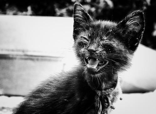 Os cálculos no sistema urinário de gatos - Petlove - O Maior Petshop Online do Brasil