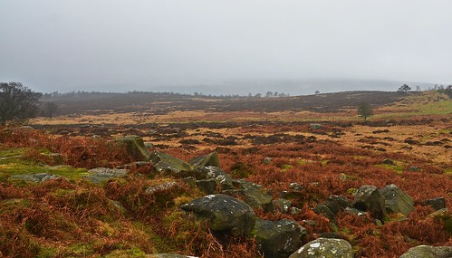 Longshaw Estate 10 by birbee