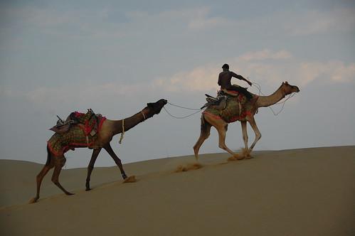 Riding camels Rajasthan