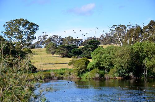 Farm Dam 06