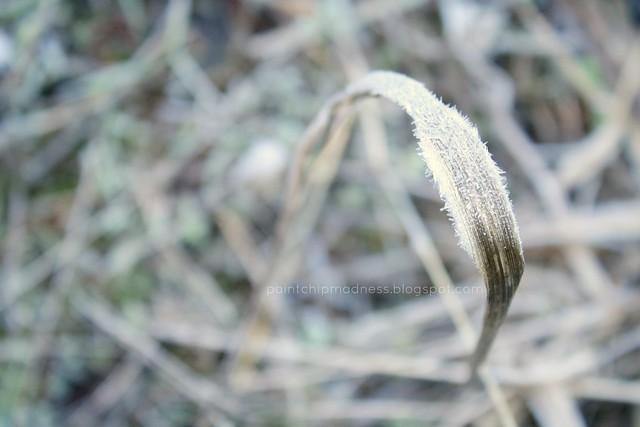 lone grass