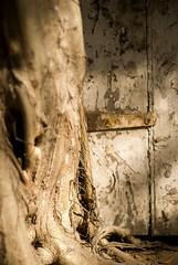 House becomes tree becomes house, Seshadri Road, Alwarpet