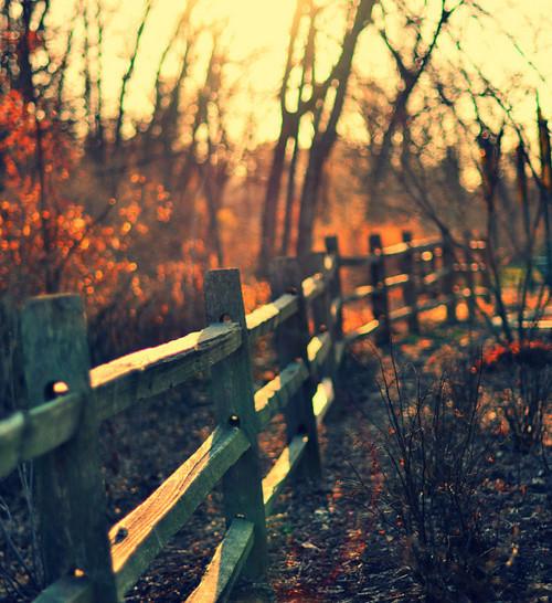 autumn-beautiful-fall-fence-Favim.com-620516_large