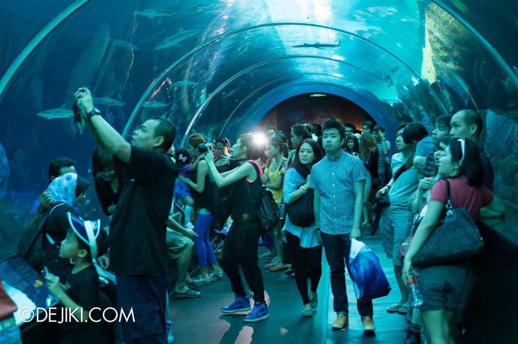 S.E.A. Aquarium - Shark Seas crowd