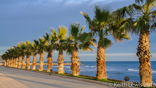 Palms at Sitges