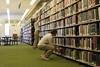 Me in library_4133_44_48.jpg