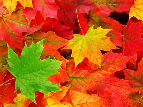 Classic Autumn Leaves Wallp TLG