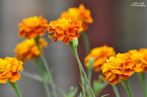 Flowers by Jidhu Jose