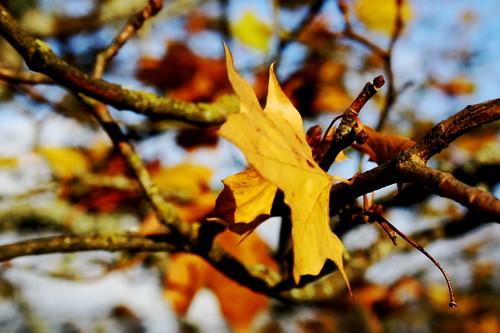 puuu2