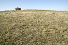 prairie, land lot, steppe, ecoregion, field, soil, grass, shrubland, plain, natural environment, terrain, meadow, landscape, wilderness, pasture, rural area, savanna, grassland,