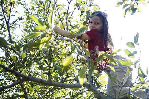 apple picking at Skytop Orchard