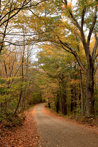 Fall, near Foster Center, Rhode Island by print57