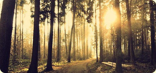 trees nature sunshine forest sunrise landscape hss happysliderssunday