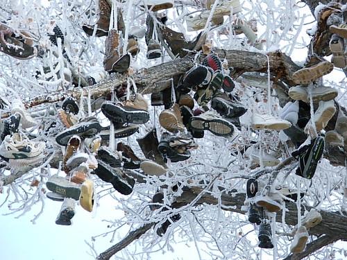 shoe tree in ice