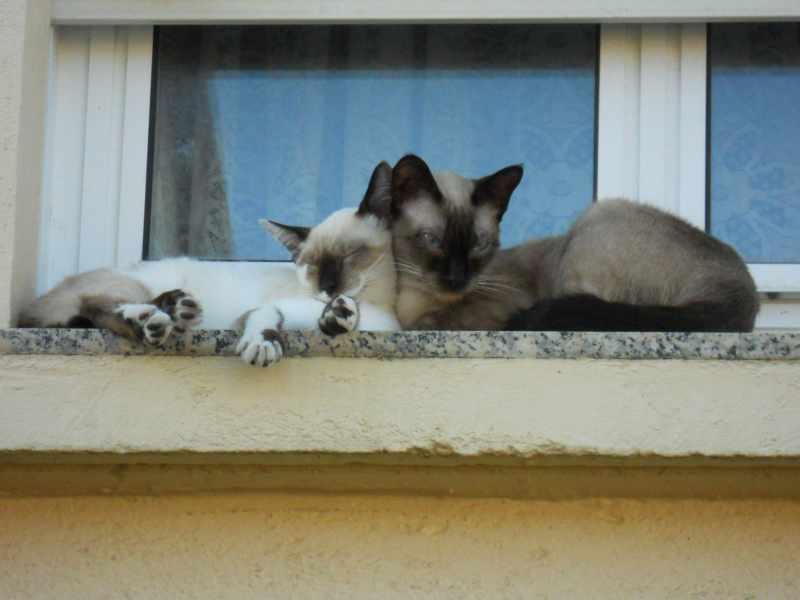 Jardineros en acci n compartir el jard n con los gatos for Ahuyentar gatos jardin
