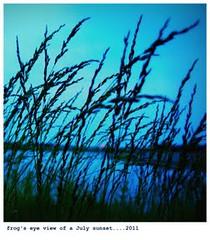 grassyPOND