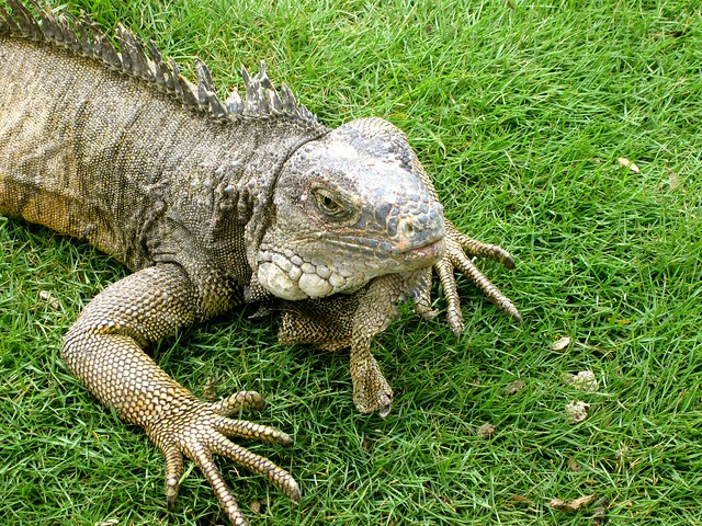 iguana park in guayaquil